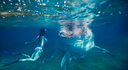 woman snorkeling underwater looks at a large whale shark.