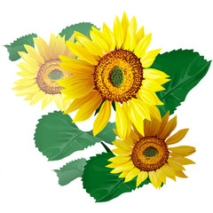 Sunflowers vector illustration.