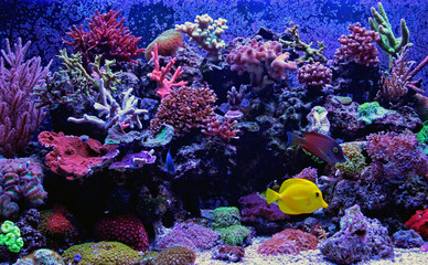 Deurstickers Onder water Amazing Coral Reef Aquarium moment