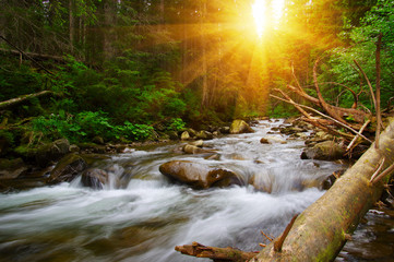 Printed kitchen splashbacks River Mountain river in the green forest