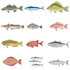 Vector set of difference kind of fish, river and sea food