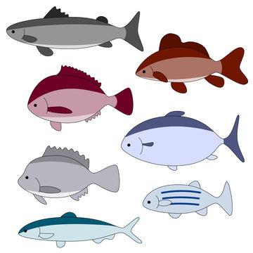 common fish set, vector