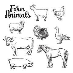 Farm animals, cow, pig, chicken, goose, poultry, livestock, color vector illustration, sketch style with a set of animals isolated on white background, realistic animal products for sale