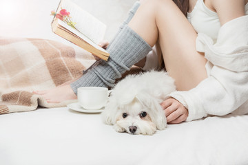 Cute small maltese pup dog lying near the slim young woman reading the book. Cozy home moments