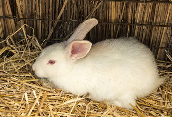 rabbit on dry grass (straw)