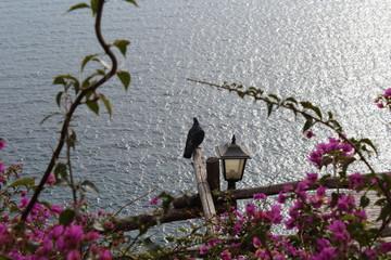 Piccione che guarda il mare