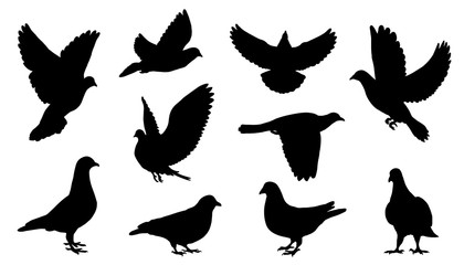 dove silhouettes Fotomurales