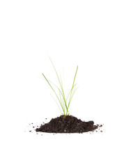 grass in the soil