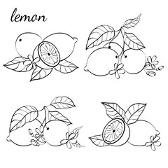 Illustration of citrus fruits.