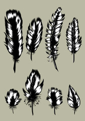 Vintage Feather set. Hand-drawn illustration.