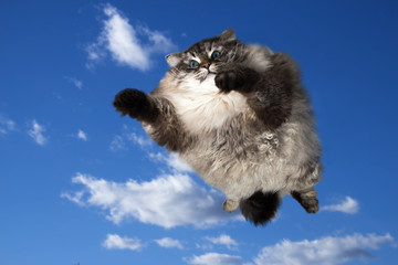 funny cat flying in the sky