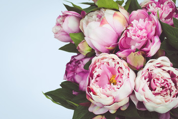 Pink Peony flowers with blue background.