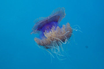 jellyfish against incredibly beautiful sea