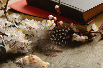 vintage still life with old books apricot blossom flowers and retro camera on a wooden surface