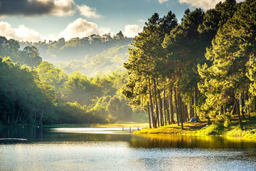 Beautiful landscape viwe reflection of pine tree in a lake