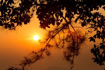 beautiful sunlight and fog at phu ruea in loei province thailand