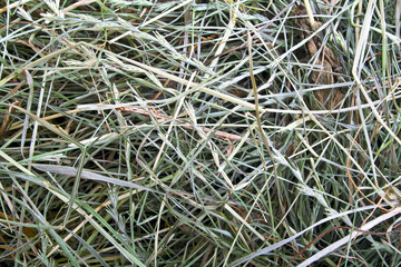 Dry hay closeup image as natural background