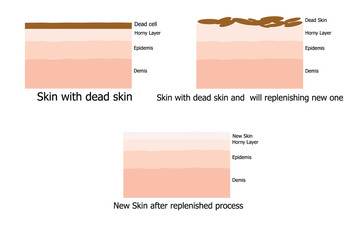 Skin replenishing process of human infographic