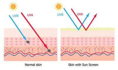 Infographic about sunscreen lotion protect human skin from UVA ,