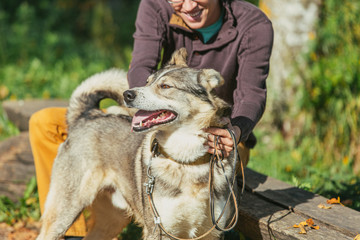 Man walking with a hunting dog - the West Siberian husky.