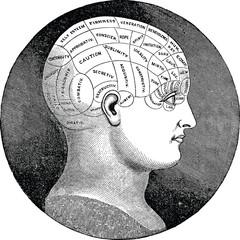 Vintage illustration phrenology