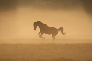 Acrylic Prints Horses Paard in de mist, toonbeeld van kracht