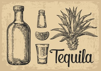 Glass and botlle of tequila. Cactus, salt and lime  Hand drawn sketch set of alcoholic cocktails. Vector illustration.