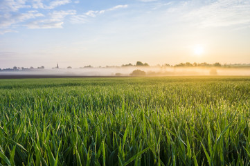 misty, sunny morning in the countryside