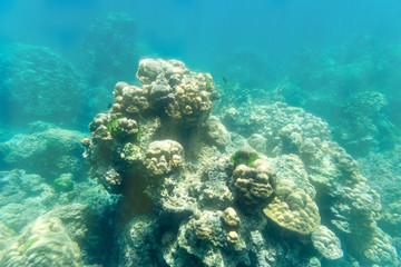 coral stone underwater on sun light