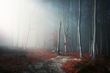 Papiers peints Forets Light through the trees in foggy forest
