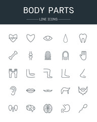 vector body parts icons line style