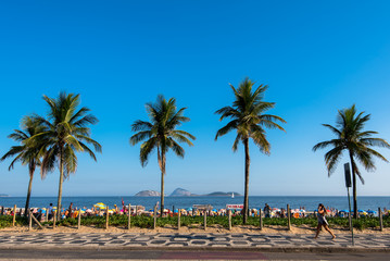 Palm Trees Along the Ipanema Beach