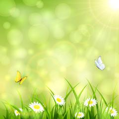 Flying butterflies on green summer background