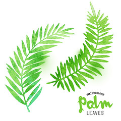 Watercolour Palm Leaves. Vector watercolour effect palm leaves. Vector illustration.