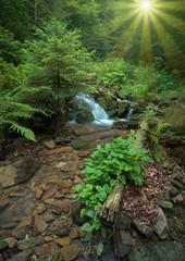Carpathian stream