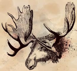 Moose head hand drawn