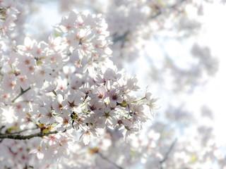 zarte Blüten im Gegenlicht