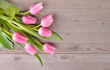 Pink tulips on wooden background.