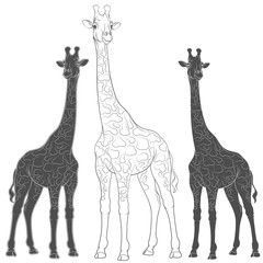 Set of vector illustrations with giraffes. Isolated objects on a white background.