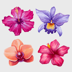 Watercolor tropical flowers. Vector illustration.