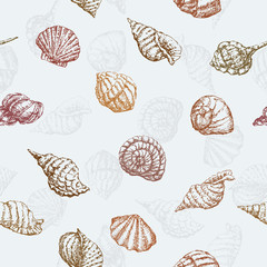 pattern of the sea shells