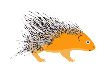 porcupine vector illustration.porcupine isolated on white background.