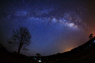 Beautiful milky way galaxy on a night sky and silhouette of tree