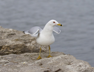 Funny photo of the serious gull near the lake