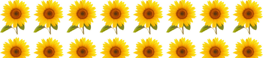header panorama  pattern flower sunflower