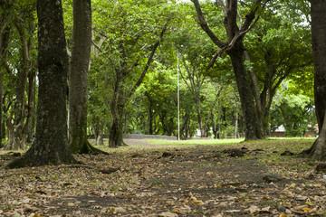 Bosque em Foz do Iguaçu