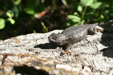 Lizard Stock Photo High Quality