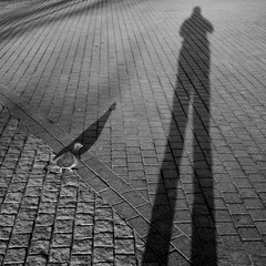 Pigeon beside human shadow projected on the pavement