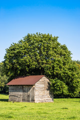 Old barn on rural meadow