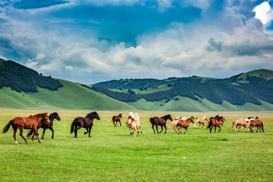 Wild horses in Castelluccio valley, Umbria, Italy